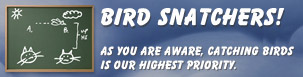 Play Bird Snatchers!